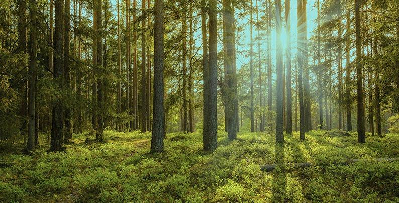 Wald – Waldbestattung in Bochum