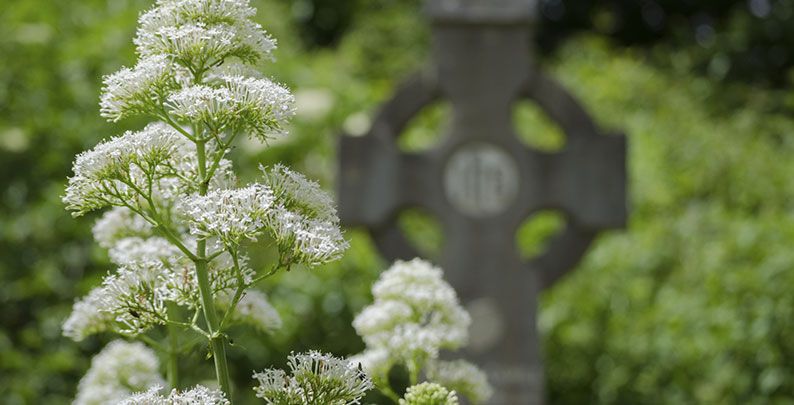 Blume auf Friedhof mit Kreuz – Erdbestattung